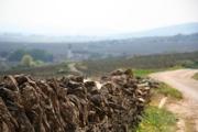 Côtes de Beaune